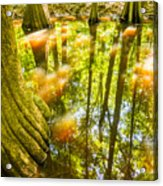 cypress forest and swamp of Congaree National Park in South Caro Acrylic Print