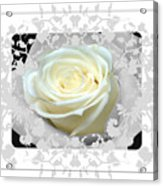 Wedding Rose Collection  Acrylic Print