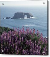 2a6101 Arched Rock And Blue Pod Lupine Ca Acrylic Print