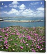 2a6106 Ice Plant Doran Beach Ca Acrylic Print