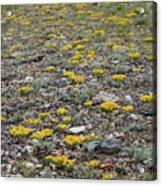2d07512 Prairie Zinnia In Lost River Range Acrylic Print