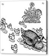 Andersen: Ugly Duckling Acrylic Print