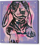 Animal Pop Art Etching Poster - Dog  5  Acrylic Print
