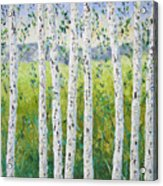 Aspen Trees Colorado Acrylic Print