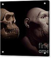 Australopithecus With Skull Acrylic Print