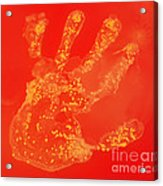 Bacteria Transferred From Hand Acrylic Print