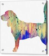 Beagle-colorful Acrylic Print