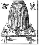 Beehive Acrylic Print