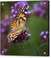 Bespeckled Acrylic Print