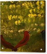 3 Birds Acrylic Print