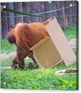 Budapest Zoo Acrylic Print