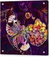 Butterfly Macro Pose Plant Green  Acrylic Print