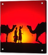 Camels At Sunset Acrylic Print