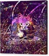 Cat Kitten Mieze Red Mackerel Tabby  Acrylic Print