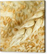 Close Up Bread And Wheat Cereal Crops Acrylic Print