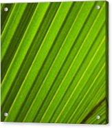 Coconut Palm Leaf Acrylic Print