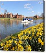 Daffodils Beside The Thames At Hampton Court London Uk Acrylic Print