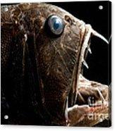 Deep Sea Fangtooth Acrylic Print