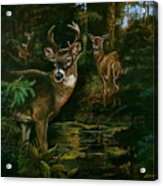 3 Deer Watching Acrylic Print