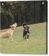 Dog Playing Acrylic Print