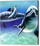3 Dolphins Acrylic Print