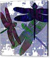 3 Dragonfly Acrylic Print