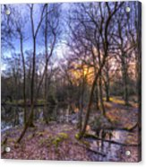 Early Morning Forest Pond Acrylic Print