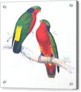 Ed Lear The Parrots Acrylic Print