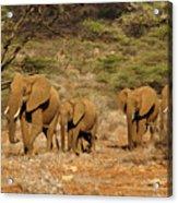Elephant Parade Acrylic Print