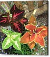 3 Flowers Acrylic Print