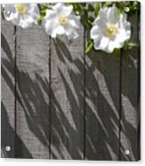 3 Flowers On The Fence Acrylic Print