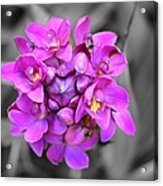 Fuchsia Ground Orchid Acrylic Print