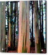 Gum Trees  Acrylic Print