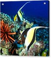 Hawaiian Reef Scene Acrylic Print