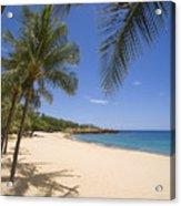 Hulopoe Beach, Palm Tree Acrylic Print