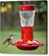 My Sweet Hummingbird Acrylic Print
