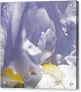 Iris Flowers Acrylic Print