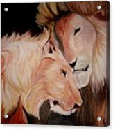 Lion's Love Acrylic Print