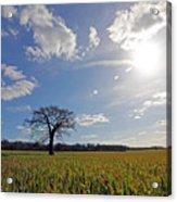 Lone Oak Tree In English Countryside Acrylic Print