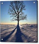 Lone Tree In Snow Acrylic Print