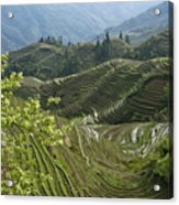 Longsheng Rice Terraces Acrylic Print