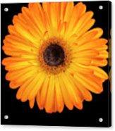 Macro Shot Of Flower Acrylic Print