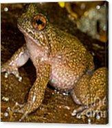 Mehu�n Green Frog Acrylic Print
