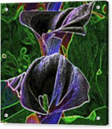 3 Neon Calla Lillies Acrylic Print