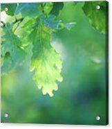 Oak Branch Acrylic Print