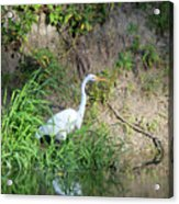 On The Bank Acrylic Print