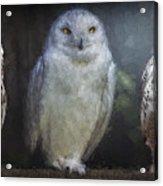 3 Owls On A Branch Acrylic Print