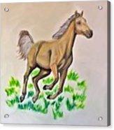 Palomino Acrylic Print
