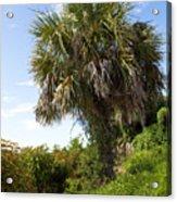 Pelican Island In Florida Acrylic Print