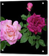 3 Pink Roses Cutout Acrylic Print